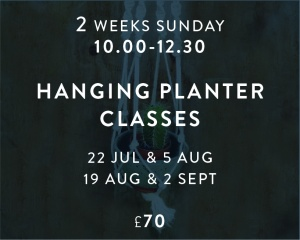 Hanging Planter Jul - Sept